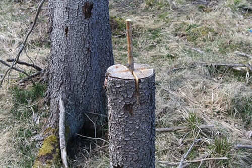 en pinne ner hugget i ett träd