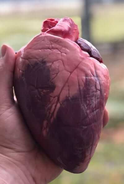 ett helt älghjärta av en älgkalv