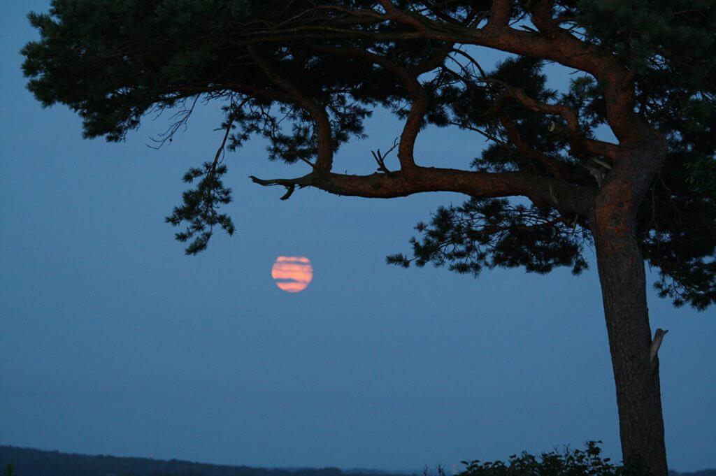 en tall och månen som lyser upp under kvällen