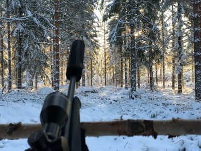 en fin vinter dag under älgjakten på ett älgpass